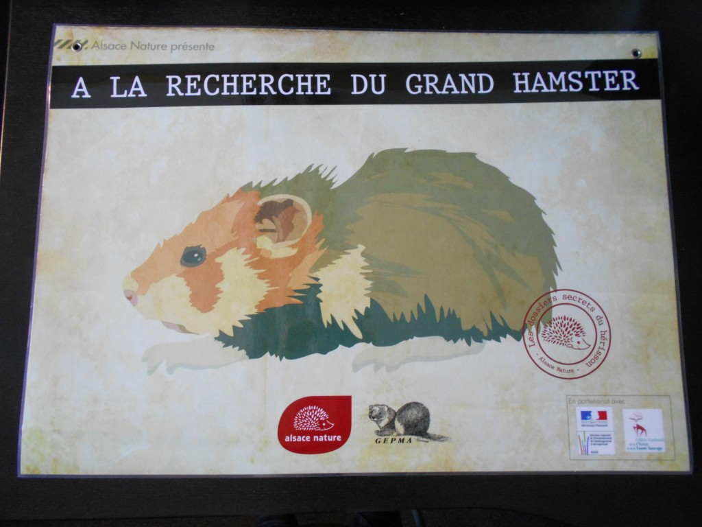 Exposition Grand Hamster