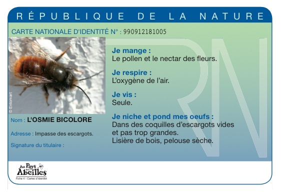 Exceptionnel Au pays des abeilles - Ariena CX07