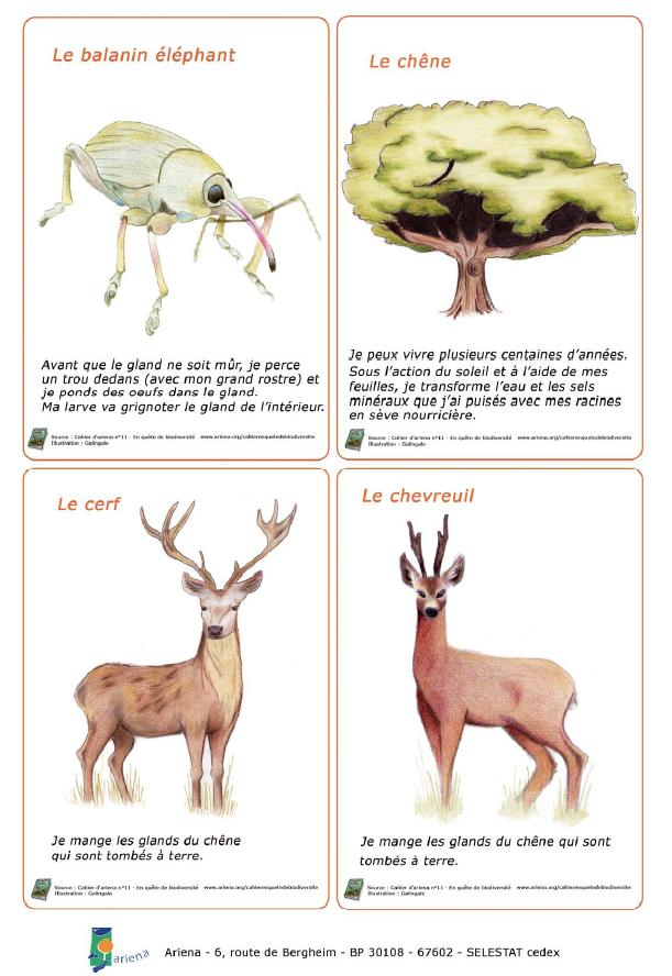Le jeu du chêne alimentaire