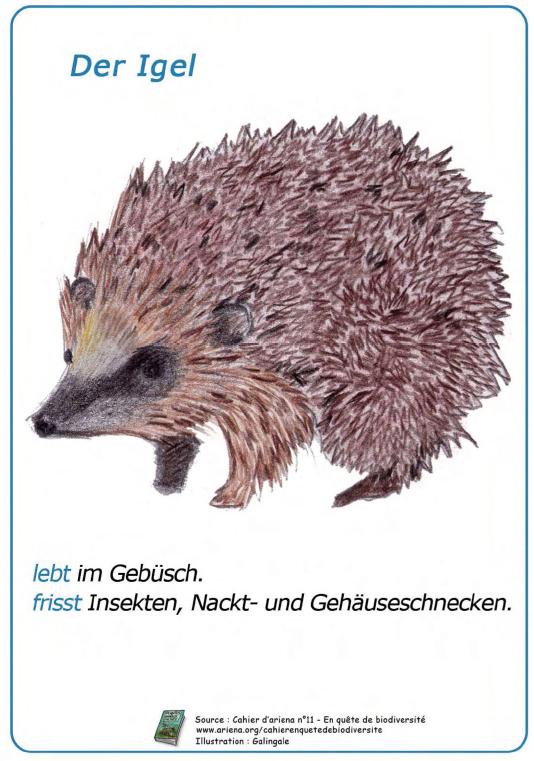 Imagier animaux en allemand