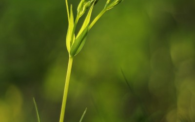 Conférence – Les plantes sont-elles intelligentes ?