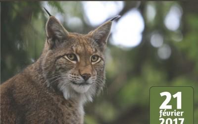 Quelle place pour le Lynx boréal dans les Vosges aujourd'hui ?