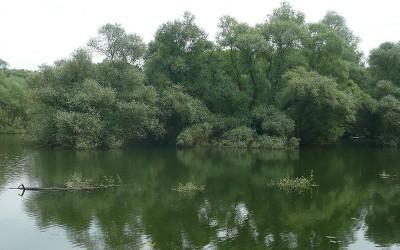 Au cœur des forêts d'Alsace du Nord