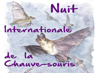 Offrez un refuge pour les chauves-souris à l'occasion de leur 22ème nuit internationale